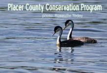 Placer County conservation
