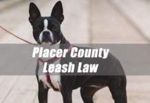 Leash Law