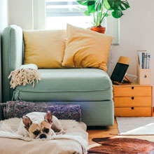 Inside Home with dog